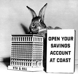 coast rabbit